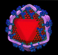 Biomedical illustration of an HIV virus showing its major structural features, including gp120 docking glycoprotein, gp41 transmembrane glycoprotein and the lipid membrane
