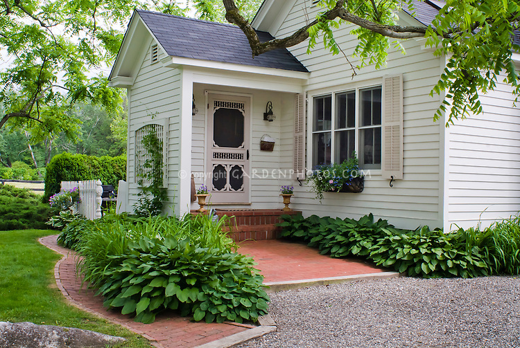 Curb appeal, shaded front entrance porch of house with hostas and daylilies planted, windowbox, white house with pink shutters and door, climbing vine, lawn, stone pebble drive, hedges, trees, garden landscaping