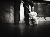 Dog, Italy, Lombardy, Milan, Milano, Street photography