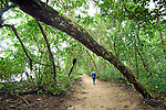 A visitor walks along a sand trail in Cahuita National Park, a lowland coastal rainforest environment on Costa Rica's southern Caribbean coast. The park is populated with tropical birds and animals.