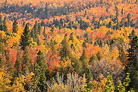 &quot;Fall Splendor&quot;<br />