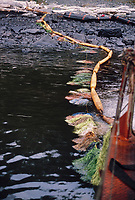 Exxon Valdez Oil Spill Clean up. Sorbent booms and pom poms contain and absorb oil washed from oil washed off Point Helen beach, Knight Island, August 1989, Prince William Sound, Alaska
