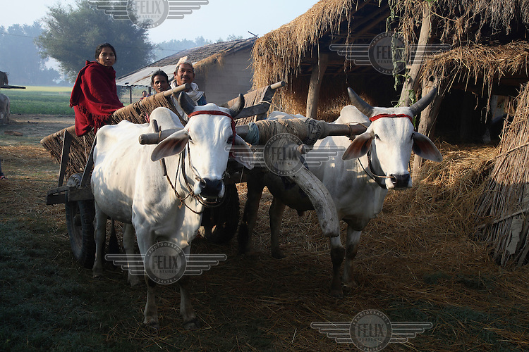 A family leaves for the fields from a Tharu homestead on their bullock cart.