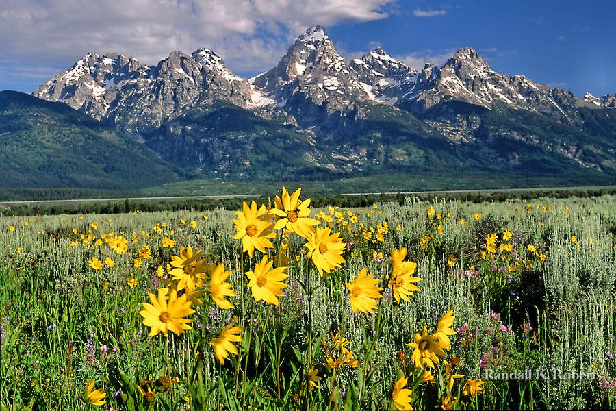 Sunflowers and Grand Tetons, Wyoming