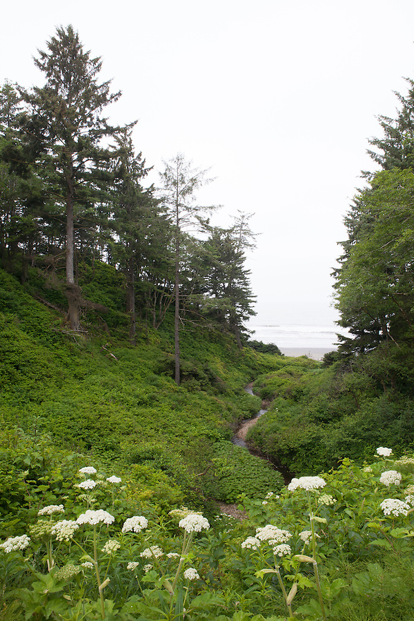 Green landscape leading to the beach and Pacific Ocean, coastal Washington state, USA