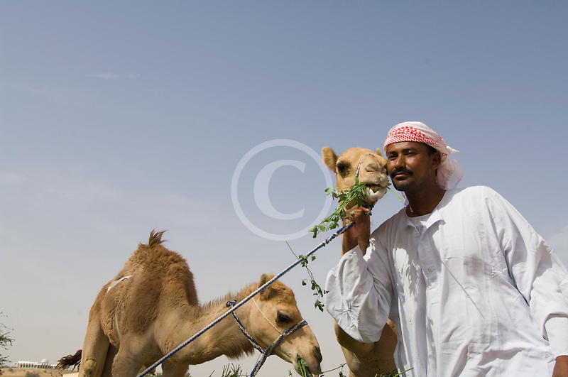 United Arab Emirates, Dubai, Camelkeeper with camels