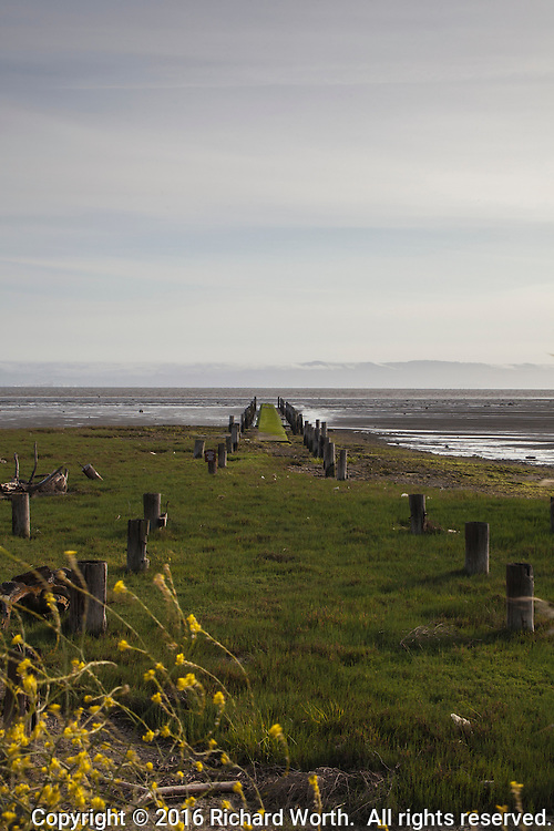 Abandoned pilings, green with moss, stretch into San Francisco Bay on a spring afternoon.