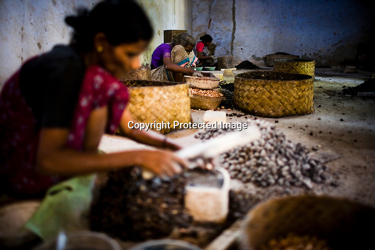 47 year old Rita Meri (centre) is seen shelling raw cashews in a cashew processing factory in Prassala, Kanyakumari district in Tamil Nadu, India.. .An estimated number of 500,000 women process cashews for a living in Tamil Nadu and Kerela. 2 million people are employed by cashew industry across India making it the world's biggest exporter of shelled cashews. .The working conditions in these processing units are way below industry standards and violates the basic rights. Wages are as low as Rs. 50 (US $1) per day. The problems for these women is not restricted to low wages. Many women are being injured by their jobs as the factory owners cut corners with health and safety. Oil released during the cashew shelling process is highly caustic, leading to common cases of dermatitis, blistering and discolouration of workers' skin. Women working in these units suffer from pains in their leg muscles, backs and knee joints after squatting positions on mud or concrete floors. It is very rare to find tables and chairs provided on shelling duty..Cashew workers' main concern is to increase their earnings and provide better working conditions. .Photo: Sanjit Das