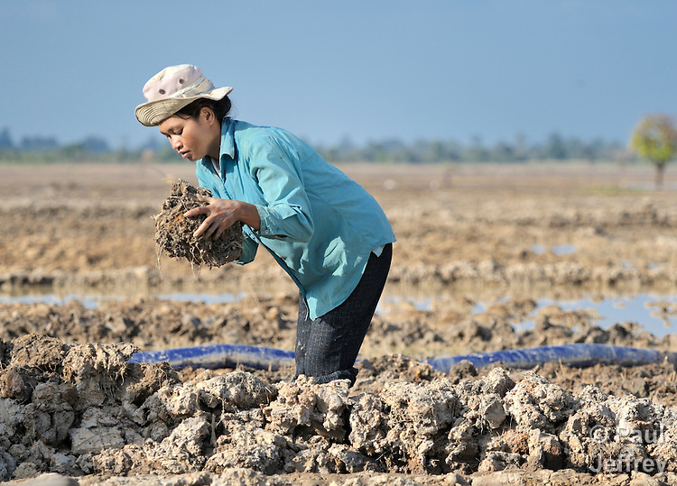Cheun Keng, a woman in the Cambodian village of Char, works building up a levee in her rice field.