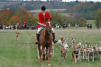 Suffolk, England, 01/11/2003..The Essex & Suffolk Fox-hounds on the first day of what may be the last legal hunting season in the UK, as Parliament moves to ban hunting with dogs..