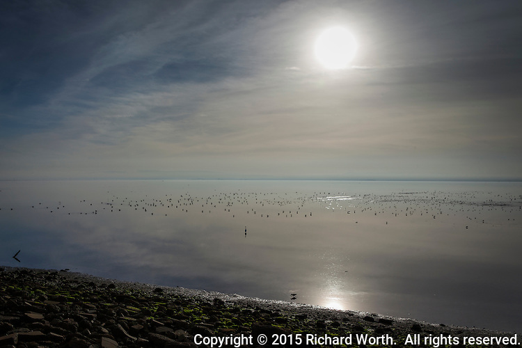 An afternoon sun glows through clouds over San Francisco Bay where hundreds of birds float and feed.
