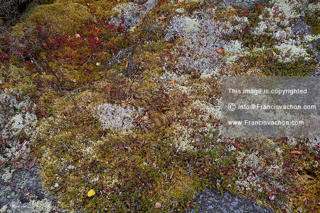 how to get rid of fruticose lichen