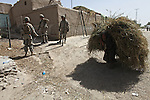 An old man hauls a load of straw past U.S. soldiers stringing concertina wire around a compound they've taken over for a new outpost in the village of Deh-e- Chowkay, in the Arghandab valley near Kandahar, Afghanistan. May 24, 2010. DREW BROWN/STARS AND STRIPES