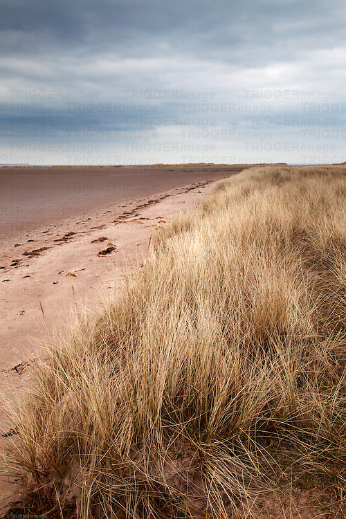 Sand Dunes and Tay Estuary Tentsmuir National Nature Reserve Tayport Fife Scotland