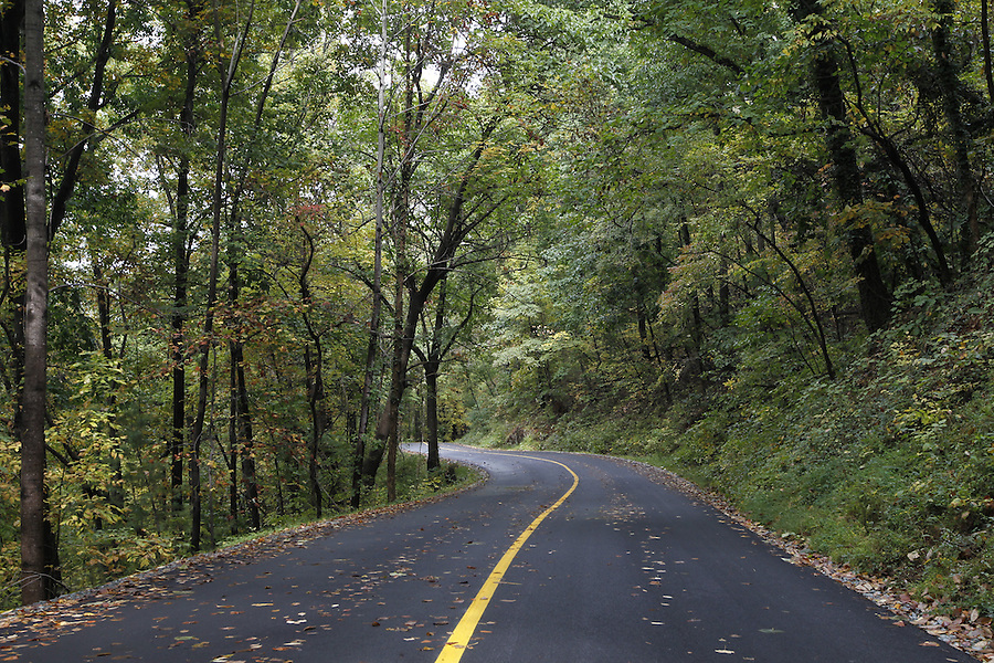 Fall leaves line the road to Carter's mountain apple orchard in Charlottesville, Va. Photo/Andrew Shurtleff