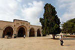 T-109 Cypress trees on Temple Mount