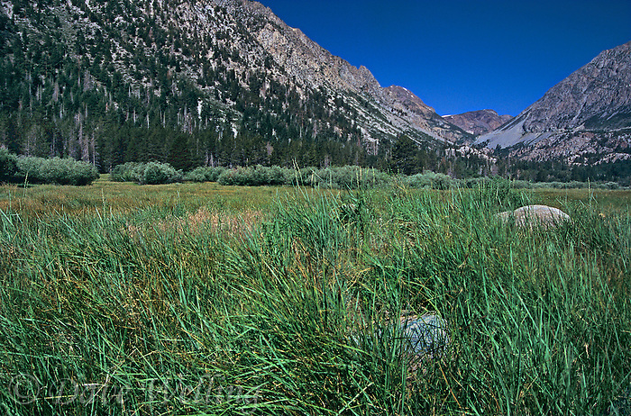 742900061 lee vining canyon below tioga pass in the north central eastern sierras of california