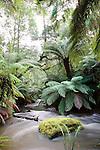 Swirling Water and Dicksonia antarctica, Mt Field National Park, Tasmania