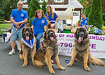 Wantagh, New York, USA. 4th July 2015. Three Leonberger breed dogs, the NYC Boys, L-R, Mr. America, Hollywood, and Magneto, are in front of the Safe Haven of Hope Foundation float in the Wantagh July 4th Parade, a long-time Independence Day tradition on Long Island. The large brown and black dogs are in the movie The Equalizer, Off-Broadway plays, Westminster Dog Show, and are Therapy Dogs.