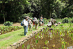 Hawaii: Molokai, Halawa Valley, with hike in past taro fields, ancient walls, to waterfalls, guided by Lawrence Aki..Photo himolo223-72019..Photo copyright Lee Foster, www.fostertravel.com, lee@fostertravel.com, 510-549-2202