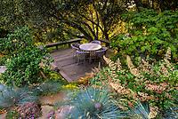 California sustainable garden room deck with Quercus agrifolia (Coast Live Oak tree), Heuchera, Blue Fescue grass, and Vine Maple tree