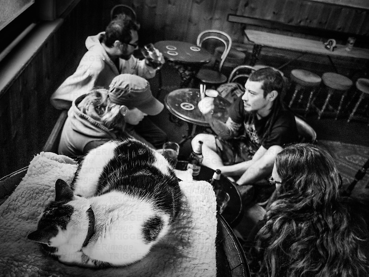 Cat in pub with people