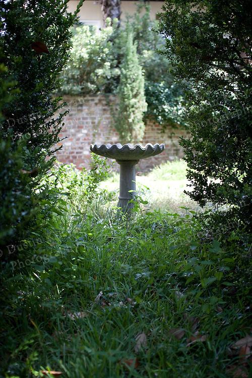 Hidden Bird Bath in a Charleston Garden