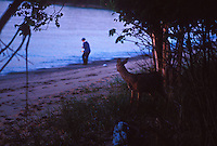 A whitetail deer watches a kayak camper on York Island in Apostle Islands Nationa Lakeshore near Bayfield, Wis.