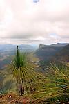 Pinnacle Lookout, Border Ranges National Park, NSW