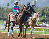 ARCADIA, CA APRIL 8: #13 Royal Mo ridden by Gary Stevens in the post parade before the Santa Anita Derby (Grade l) on April 8, 2017 at Santa Anita Park in Arcadia, CA. (Photo by Casey Phillips/Eclipse Sportswire/Getty Images)