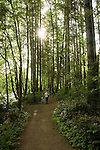 Woman walking along a  forest trail showing moss covered trees close to the Campbell river Vancouver Island, British Columbia, Canada