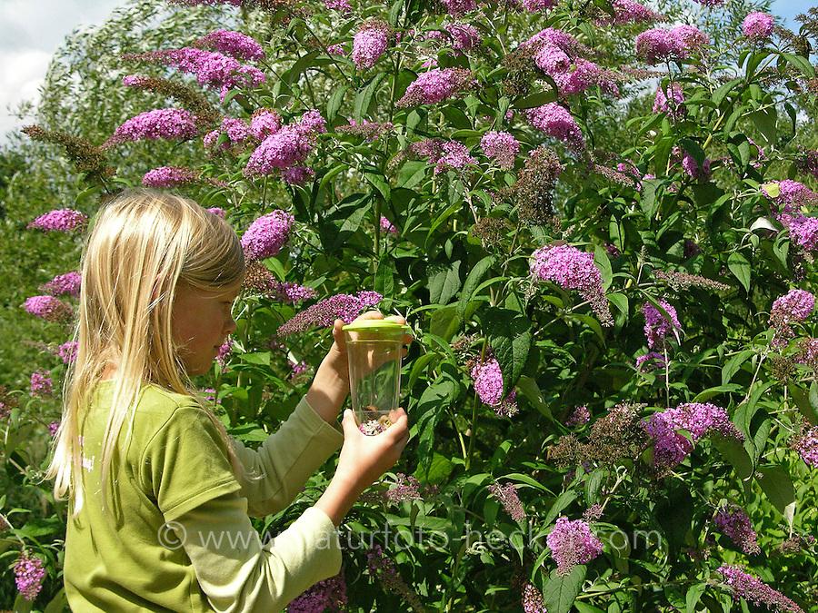 Mädchen beobachtet gefangenen Schmetterling an Schmetterlingsflieder im Garten, Sommerflieder, Buddleja