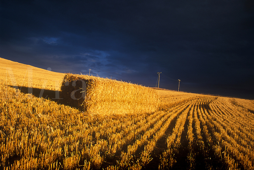 CROP LINES &amp; BALED HAY UNDER A FOREBODING SKY