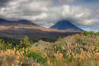 In the region of Lake Taupo and the Ruaperu (2797m) and Tongariro (1978m) Volcanoes, the beekeepers bring their hives for the late flowering (due to the altitude and the temperature) in February of the Manuka. In Polynesian mythology, human beings, the elements and everything that makes up Nature descended from Father Sky and Mother Earth. That's the reason why the ancient Maoris identified with all of nature.