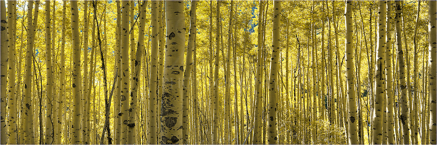 Each fall the Aspen turn gold before winter sets in. This Colorado image comes from the Maroon Bells and attempts to capture the soft morning sunlight as it lights up the leaves. Landscapes such as this are some of my favorite images to capture - the timing, the light, the location all come together to capture a moment in the changing seasons of the Rocky Mountains