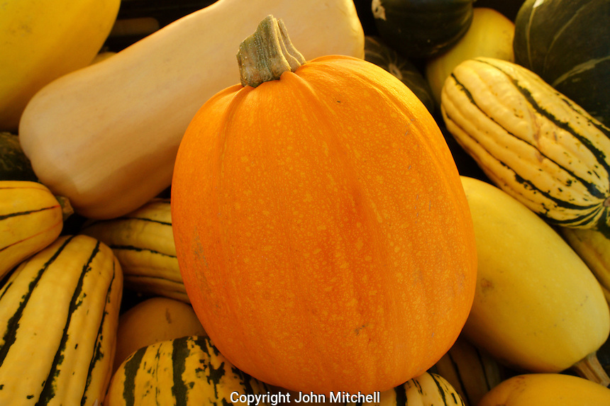 Fall pumpkin and squash, Vancouver, BC, Canada