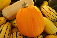 Fall pumpkin and squash, Vancouver, BC, Canada