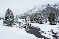 Soda Butte creek in Yellowstone National Park duing winter