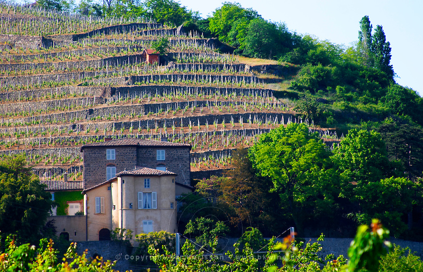 The Chateau Grillet, that has its own appellation close to Condrieu with its vineyard behind.   Château Grillet, Vérin, Rhone, France, Europe