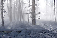 Tangle Creek, Lower Geyser Basin, Yellowstone National Park. As temperatures drop in Yellowstone during the deep winter months, the thermal areas can take on a eerie, almost ethereal air.