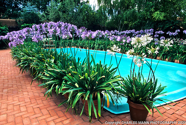 The gardens of Santa Fe,New Mexico, offer a constant suppply of delightful surprises and artful delights. The garden of Josette de la Harpe features potted blue flowered agapanthus along with traditional English garden perennials  all set in a rustic Santa Fe courtyard.r