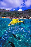 Hanauma Bay is mecca for colorful marine life and a snorkelers paradise.