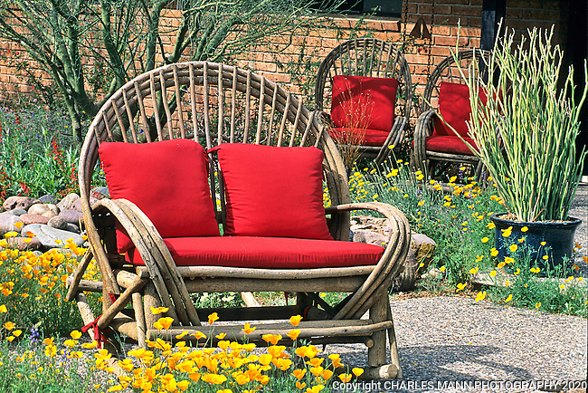 Phoenix garden designer Carrie Nimmer transformed this urban xerixcape garden into a striking compoition by adding  some funky bentwood furniture with bright red cushions.
