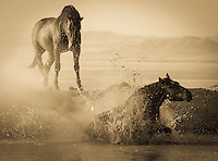 Drama at the Waterhole - Utah - Wild Horses - Mustangs