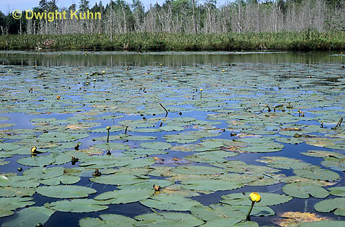 PO02-005b  Pond with water lilies