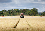 Tractor spraying cereals crop in a field