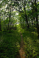 A footpatch leades through dense and shady woods in the Grand Sable Dunes in Pictured Rocks National Lakeshore near Grand Marais Michigan.