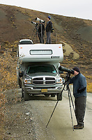 Photographers look for the best view of a Dall sheep (not pictured) alongside Denali Park Road on Sept. 14, 2008. Denali National Park was established to protect big game animals.