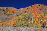 Bishop Pack Trailhead - Fall Color