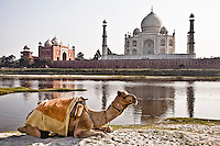 Taj Mahal  built  on the banks of river Yamuna by emperor Shah Jahan in the memory of his beloved wife Mumtaz Mahal. (Photo by Matt Considine - Images of Asia Collection)